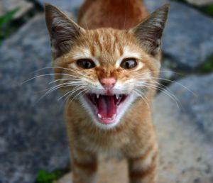 Katzen Verscheuchen