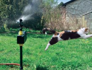 Wasser Katzenschreck